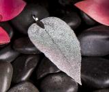 Silbernes Blatt, mittel,  versilbert